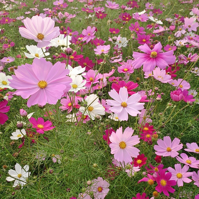 Flower_800x800